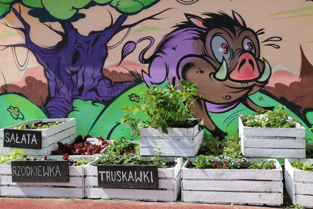 Społeczny ogródek warzywno-ziołowy na placu zabaw przy ul. Fabrycznej